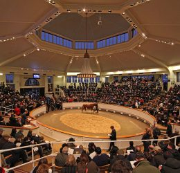 Tattersalls December Sale Mares etc 05/12/17